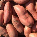 Orange-fleshed Sweet Potato