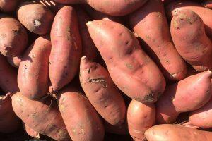 Orange-fleshed Sweet Potato