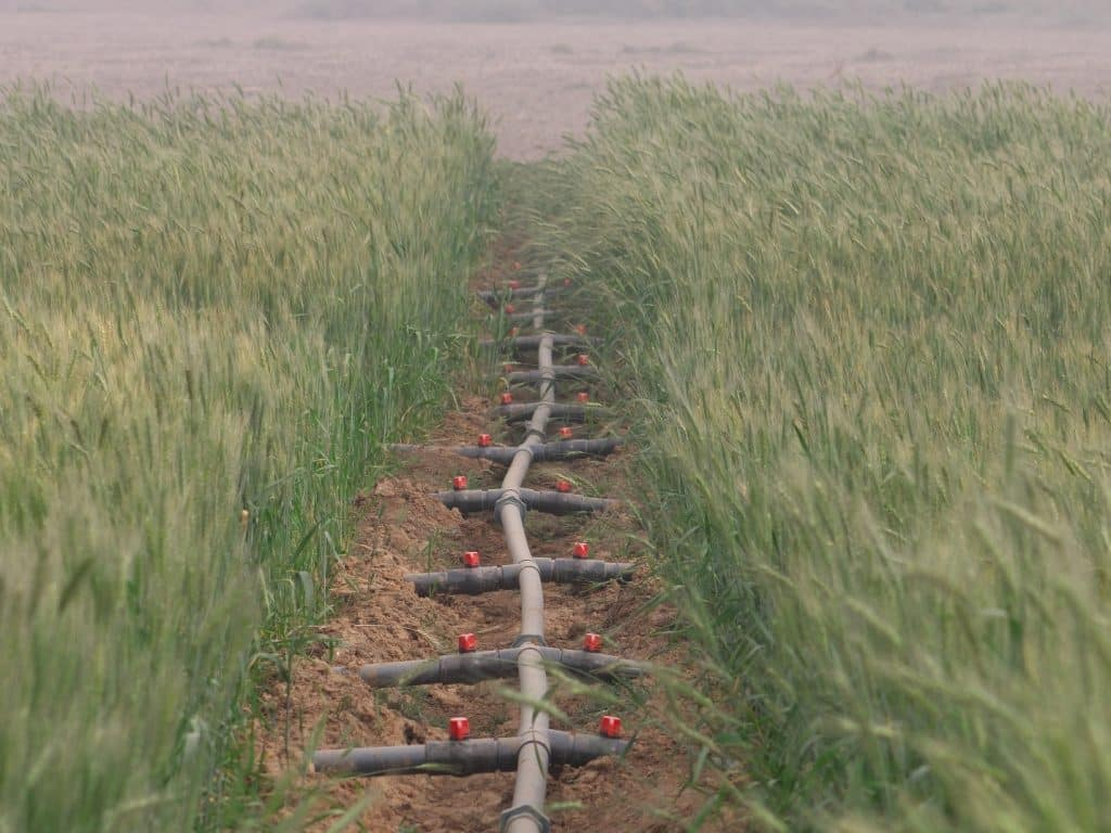 Wheat farmers in Nigeria embrace smart irrigation practices