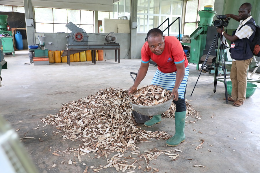 From Waste to Wealth: How cassava peels processing