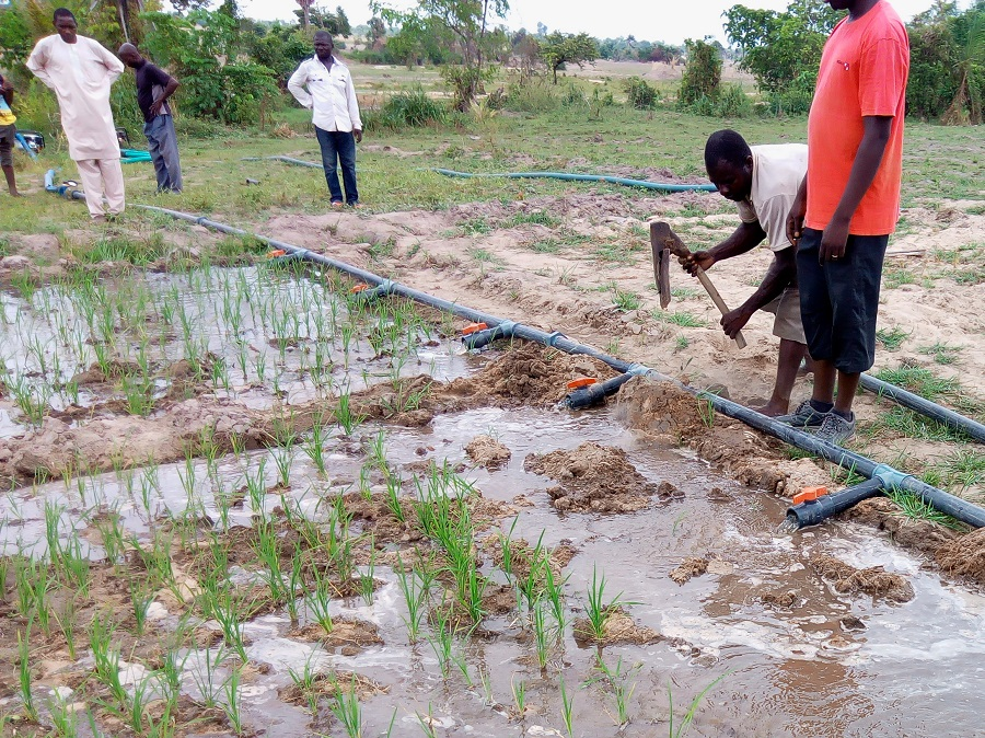Nigerian rice farmers to double income through double