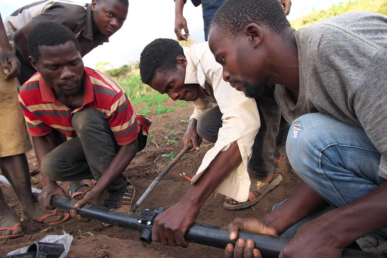 OFSP vine producers in Malawi receive on-the-job training in installation of irrigation equipment (PHOTO: IWMI/Sander Zwart)